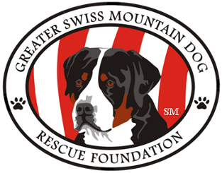 Greater Swiss Mountain Dog Rescue Foundation Home